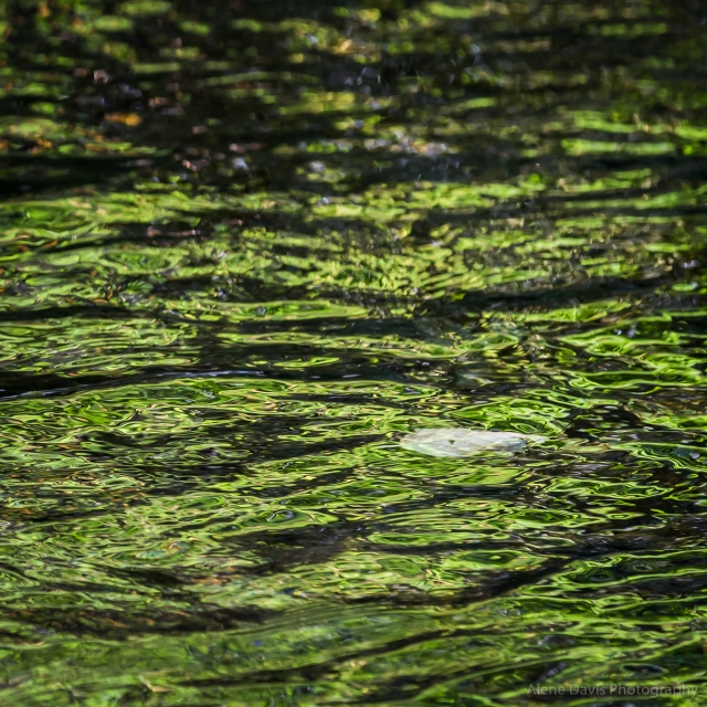 A bright sunny day creates strong reflections in the water. Here a leaf floats down the creek while the sunny green of the trees on the opposite bank ripples across the water's surface.