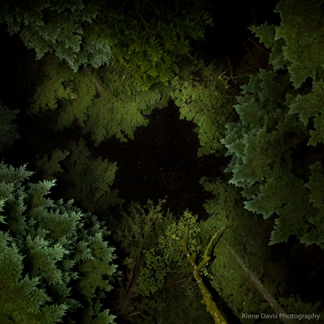 Stars in a break in the trees in the Mt. Hood National Forest. (An example of light painting the trees.)