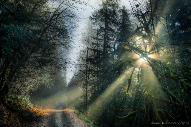 Forest Sunlight Path-9632
